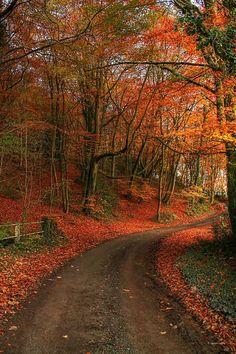 Forest Road, Shropshire, England photo via perla