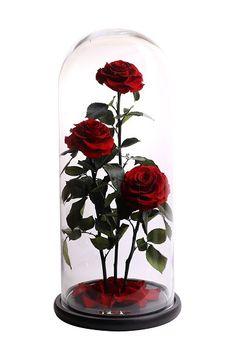 + Розы не требует ухода Не требует полива Гарантия 3 года Заявки по сотрудничеству WatsApp/Viber +7(916)993-05-87  #роза #цветы #розавклоше #розавколпаке #розавстекле #розавкуполе #розавколбе #rose #flowerpower #flower #флористика #свадьба #декор #красавицаичудовище #цветок #цветывколпаке #цветывстеклах #цветывколбе #цветывклоше #цветывстекле #колба #роза #цветы #belle #bellarosa #bellerosa #bella #розанастебле #розавклоше #подарок
