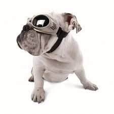 Doggles Originalz - Doggy GogglesEver since I first saw a little canine head with goggles on poking out the backpack of a motorcycle…View Post All Dogs, Best Dogs, Dog Goggles, Dog Eyes, Dog Accessories, Your Best Friend, Dog Life, Your Pet, Dog Lovers