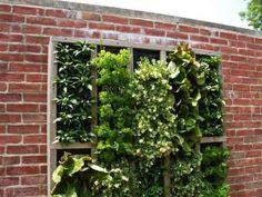 Stunning photos of vertical wall gardens.