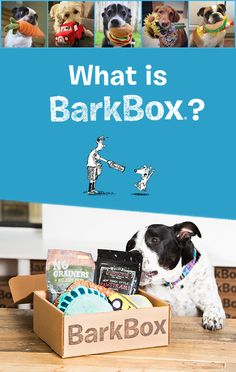 BarkBox is a monthly themed box of fun toys and all-natural treats and chews for your pup. Plans start at $20/month and are customized based on dog size. Get started on BarkBox.com!