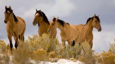 Horse Amazing Animal around the World