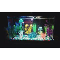 Freshwater glo fish tank