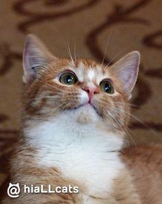 Such a cutie! #cat #beautiful #fluffy #cats