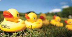 Love Love Love these cute yellow ducks  (cozi.com)