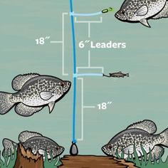 20 Secrets To Help You Catch Fish All Summer Long Field & Stream Bass Fishing Tips, Fishing Rigs, Fishing Knots, Gone Fishing, Best Fishing, Trout Fishing, Fishing Tackle, Carp Fishing, Fishing Stuff