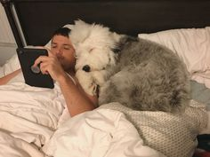 An underrated benefit of having an Old English Sheepdog: Free Extra Pillow!
