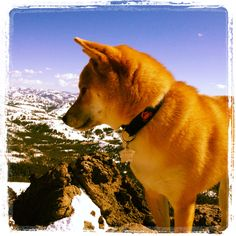 Oscar at the top of Castle Peak