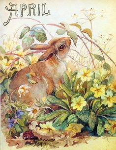 Hare and pasque flowers - Morning Earth Artist/Naturalist Edith Holden
