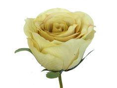 """Vara de rosa, de flor artificial, en tallo con hojas verdes, de 75 cms de altura y 9 cms de diámetro. Colección """"Romantic"""". Disponible en color crema, salmón, naranja, coral, mostaza, turquesa y gris perla."""