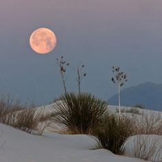White Sands, New Mexico!