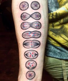 "Out of Step Books Publishing on Instagram: ""Check out this rad #mitosis #cell splitting #tattoo by @evedoestattoos at @black_iris_tattoo! Super cool piece and perfect for all of you #biology and science nerds! Viva la Creativity! """