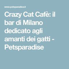 Crazy Cat Cafè: il bar di Milano dedicato agli amanti dei gatti - Petsparadise