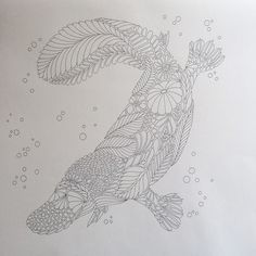 One of my favourites the duck-billed platypus here to bring exciting news of the title for my next book 'Millie Marotta's Curious Creatures'. Im loving exploring the world's weird and wonderful creatures for this one. #duckbilledplatypus #curiouscreatures #colouringbook #coloringbook #colouringinforgrownups #colortherapy #illustration #wildlife by milliemarotta