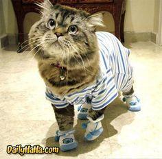 Cat in Pyjamas
