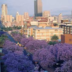 wide avenues of purple flowering Jacarandas in Pretoria Kruger National Park, National Parks, Beautiful World, Beautiful Places, Amazing Places, Africa Hunting, Places To Travel, Places To Go, Port Elizabeth