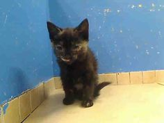 5 week old Sugar & her family are safe!!!