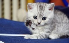 Cute small cat | Funny & Cute Cat Pictures