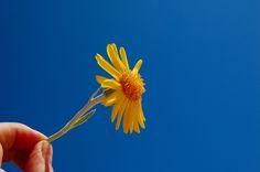 Be the joy seeker that you are ~//~ Seja o buscador de alegria que você é