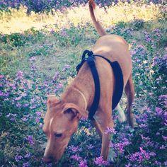 El del ramo de violetas