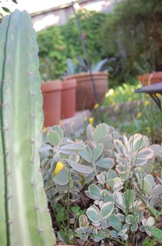 succulents, cacti, and greens