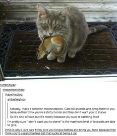 This is why I love cats....