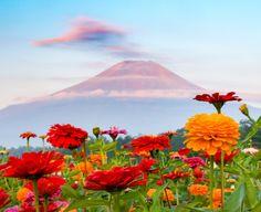 2016 Fuji and Zinnia by shinichiro 山中湖 花の都公園 http://flic.kr/p/KBPSP7