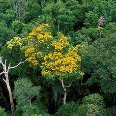 Serra da Cutia National Park - Rondônia, Brazil