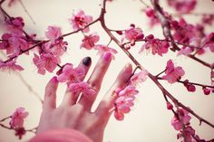 양산여행, 양산가볼만한곳 : 여행중 들렀던 통도사 매화와 함께 지인동생이 해준 젤네일 찰칵! http://pinksanho.com