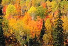 God Carefully Watches The Goings On Of All Mankind...fall leaves on trees...Job 34:21