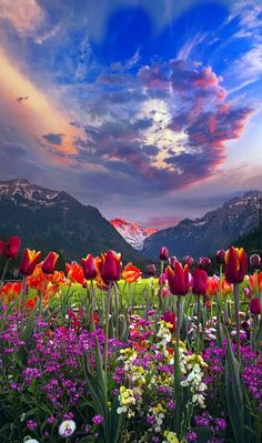 Do I remember this valley, have I been here before.  There have been so many valleys, so many mountains, too many flowers.
