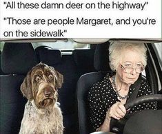 Funniest Animal Memes Of The Day That Are Extremely Hilarious Pics) - Page 2 of 4 - Awed! Funny Car Memes, Funny Animal Memes, Funny Animals, Cute Animals, Hilarious, Animal Pictures, Funny Pictures, Weekend Humor, Memes Of The Day