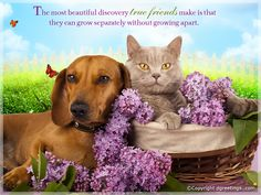 True friends will always be there no matter how far you may be.