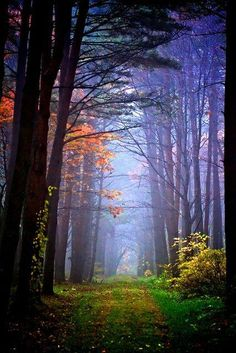 New tree forest pathways ideas Foto Nature, All Nature, Beautiful World, Beautiful Places, Beautiful Pictures, Wonderful Places, Beautiful Roads, Tree Forest, Forest Path