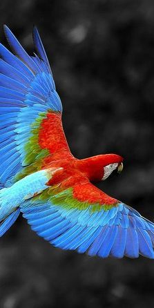 """Mug shot for Craig Buckner and his macaw, """"Bird. – A macaw named """"Bird"""" is an instant Colorful Feathers, Colorful Birds, Bird Feathers, Pretty Birds, Beautiful Birds, Animals Beautiful, Kinds Of Birds, All Birds, Tropical Birds"""