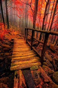 Forest bridge Italy