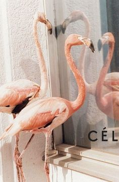 A Céline flamingo Pinky Peach done perfect on AnOther Loves