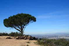 Hike one of the most rugged and fun routes in Griffith Park to the (locally) famous Wisdom Tree and on to the Hollywood Sign itself.