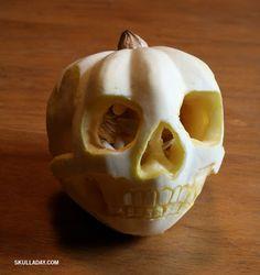 Squash(ed) Skull