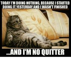 33 Funny Cat Memes That Never Fail to Make Us LOL and like OMG! get some yourself some pawtastic adorable cat apparel! Funny Animal Jokes, Funny Cat Memes, Funny Animal Pictures, Cute Funny Animals, Animal Memes, Funny Cute, Cute Cats, Funniest Pictures, Funny Humor