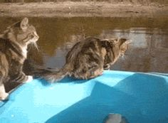 Even though he didn't make it, he still made it really far for a freaking cat!!!