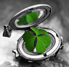 touch of green clover