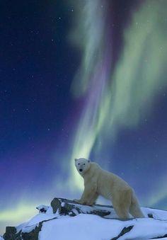 canada+auroral+boreal+tumblr | Viendo la aurora boreal