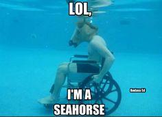 I'm a sea horse