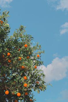 Under blue sky wallpaper ~ Mobile wallpapers hd, free Mobile backgrounds Orange Aesthetic, Nature Aesthetic, Flower Aesthetic, Aesthetic Photo, Aesthetic Pictures, Aesthetic Pastel, Aesthetic Grunge, Aesthetic Vintage, Summer Aesthetic