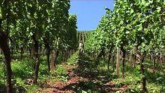 Rheinhessen - Deutsches Weinanbaugebiet Vineyard, Outdoor, German, Round Round, Outdoors, Vine Yard, Vineyard Vines, Outdoor Games, The Great Outdoors