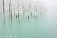 Green Frozen Pond,hokkaido