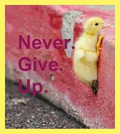 Never give up! (I love the little ducky)