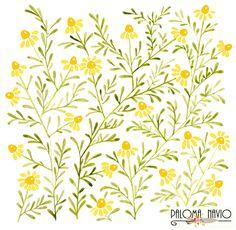Yellow camomile flowers by Paloma Navio