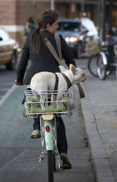 french bulldog in a bike basket. I need that on the back of my bike! I Love Dogs, Puppy Love, Cute Dogs, Funny Dogs, Wrinkly Dog, Biking With Dog, Wit And Delight, Love French, Oui Oui